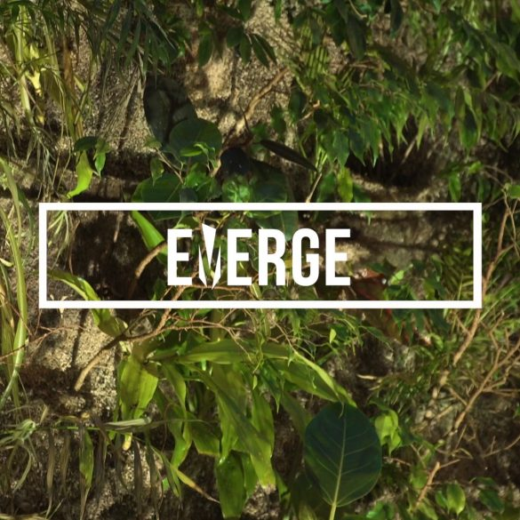 What is Emerge